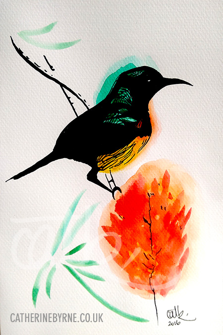 African Sunbird watercolour ink art by Cat Byrne